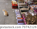 Cats I saw on the streets of Hong Kong 70742126