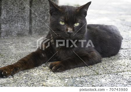 Stray cat 70743980