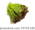 Sunny lettuce lettuce 70745190