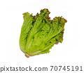Sunny lettuce lettuce 70745191