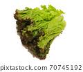 Sunny lettuce lettuce 70745192