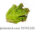 Sunny lettuce lettuce 70745193
