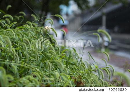 Rainy season city landscape 117 70746820