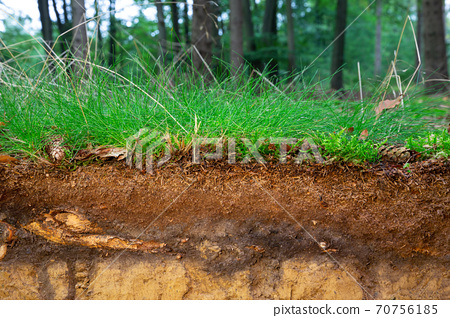 Organic layer and topsoil of a Vertisol 70756185