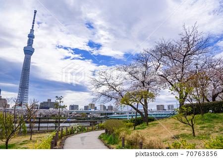 (도쿄도) 봄의 스미다 공원 및 스카이 트리 70763856