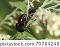 生物昆虫我爱代木甲虫和代木。您也可以在路边的代代木上找到它 70764248