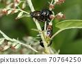 생물 곤충 요모기하무시 늦가을까지 활동하는 타입. 이곳은 수십 월 하순의 초원에서 결정되고 교미 중 70764250