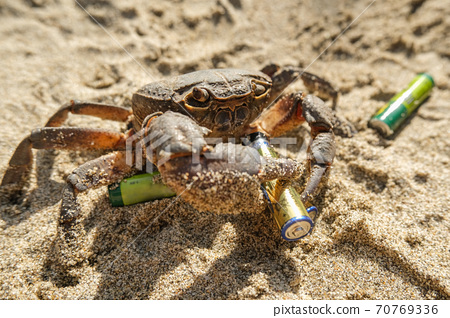 Sea crab hold discarded lithium battery on polluted marine beach ecosystem 70769336