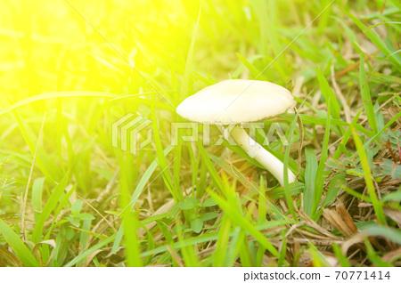 mushroom in nature 70771414
