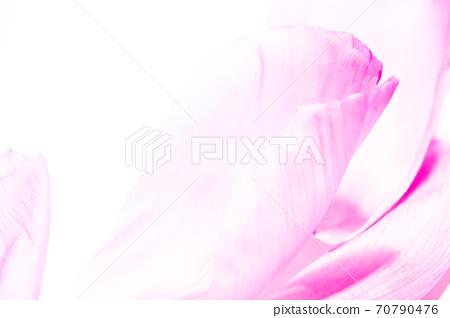 花瓣背景材料(白色x粉色) 70790476