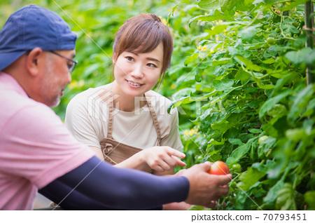 농업 체험 70793451