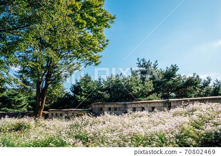 Namsan Park. Wild flower field with green trees in Seoul, Korea 70802469