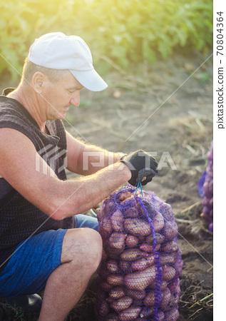 Farmer ties a mesh bag of potatoes. Harvesting potatoes on farm plantation. Preparing food supplies. Growing, collecting, sorting and selling vegetables. Farming. Countryside farmland. 70804364