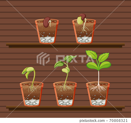 Set of plant on shelves 70808321