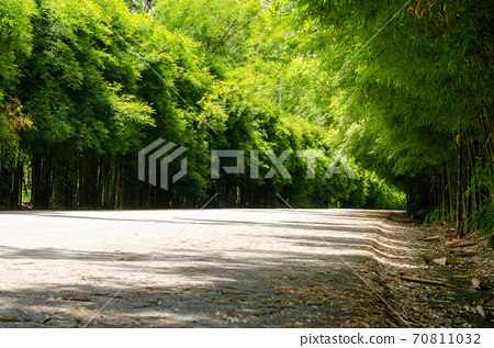 Tunnel of green bamboo forest sideways road 70811032