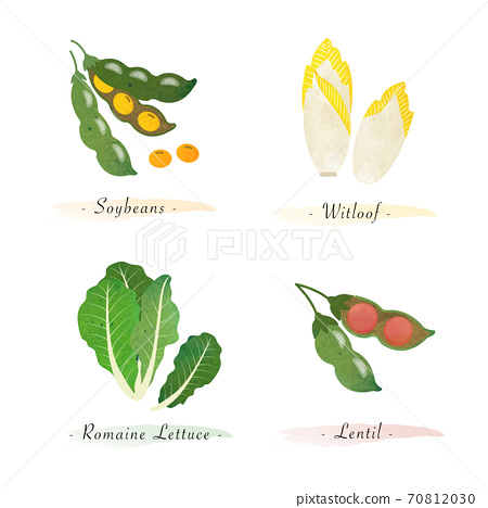 Watercolor healthy nature organic plant vegetable food ingredient soybeans witloof romaine lettuce lentil 70812030