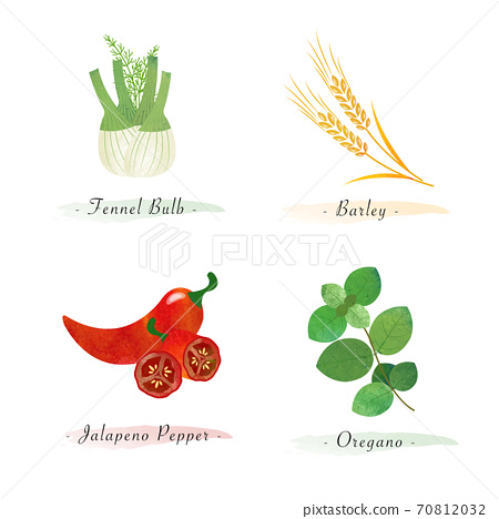 Watercolor healthy nature organic plant vegetable food ingredient fennel bulb barley jalapeno pepper oregano 70812032