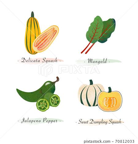Watercolor healthy nature organic plant vegetable food ingredient delicata squash mangold jalapeno pepper sweet dumpling squash 70812033