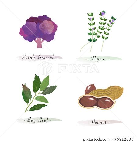 Watercolor healthy nature organic plant vegetable food ingredient purple brocoli thyme bay leaf peanut 70812039