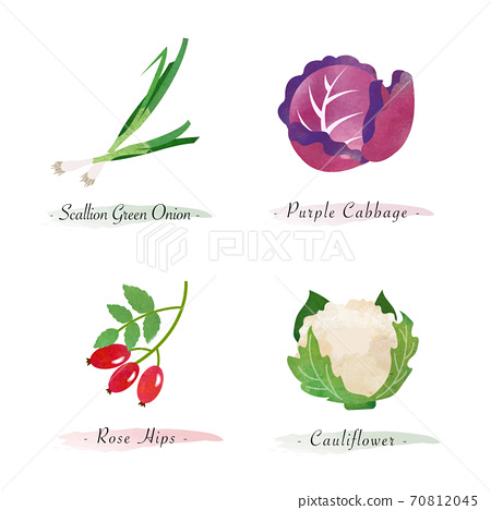 Watercolor healthy nature organic plant vegetable food ingredient scallion green onion purple cabbage rose hips cauliflower 70812045