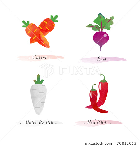 Watercolor healthy nature organic plant vegetable food ingredient carrot beet white radish red chili 70812053