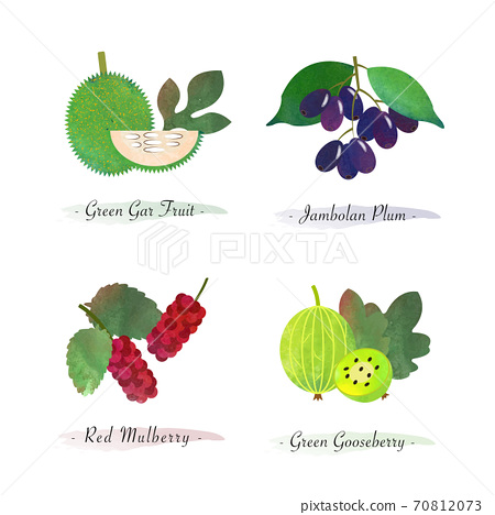 Organic nature healthy food fruit green gar fruit jambolan plum red mulberry green gooseberry 70812073