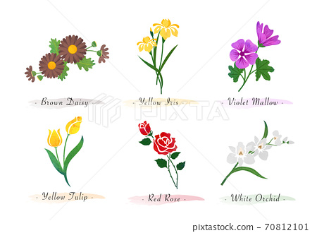 Watercolor botanic garden nature plant flower daisy iris violet mallow tulip rose orchid 70812101