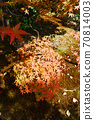 Image of autumn leaves and autumn 70814003