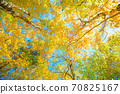 Autumn leaves of Odaigahara 70825167