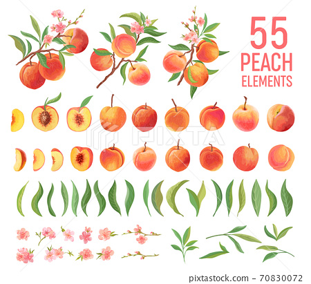Peach Fruit watercolor element set. Isolated peaches collection of fruits, leaves, slices on white 70830072