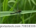 생물 곤충 야마사나에 암컷입니다. 비교적 크고 건장한 타입 초여름에 많이 볼 수 있습니다 70838306
