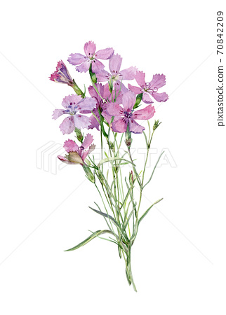 Watercolor small bouquet of pink wild flowers 70842209