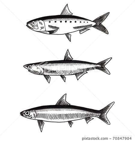 簡單的手繪鰻魚(3種類型)插圖 70847984