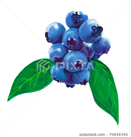 Hand drawn blueberry real illustration 70848340