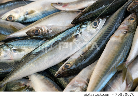 Fresh mackerel fish on ice 70850670
