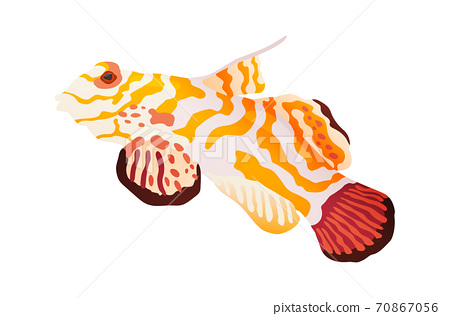 Fish Orange And White Stock Photos