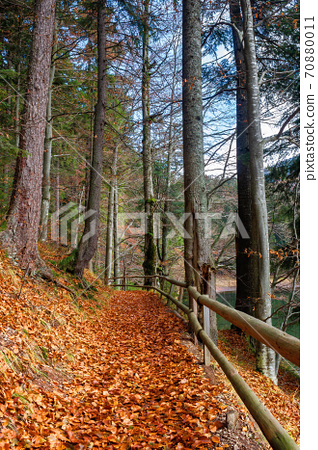 pathway through the forest. beautiful autumn scenery. wooden fence along the walkway covered in fallen foliage 70880011
