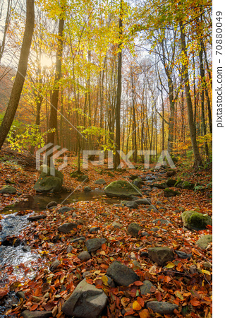brook in the forest. wonderful nature scenery on a sunny autumnal day. trees in colorful foliage. water stream among the rocks and fallen leaves on the ground 70880049