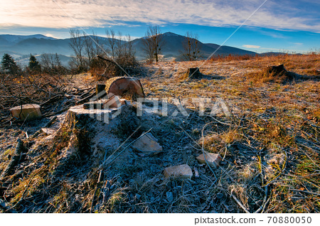 deforestation in the mountains. stump of fresh cut trees in hoarfrost. cold autumn morning countryside scenery 70880050