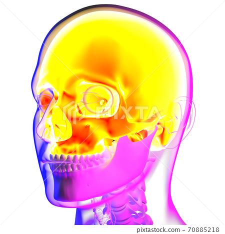 3d rendering illustraion of upper skull 70885218