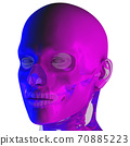 3d rendering illustraion of upper skull 70885223