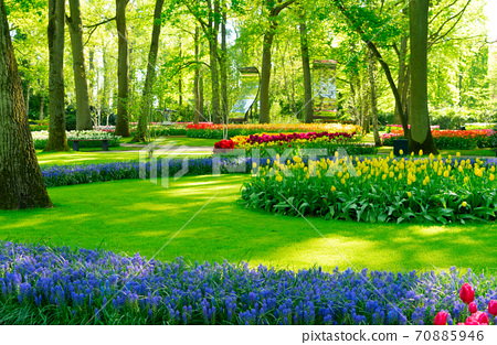 fresh lawn with flowers 70885946