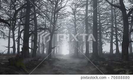 3d render of a scary and empty forest in the fog 70888880
