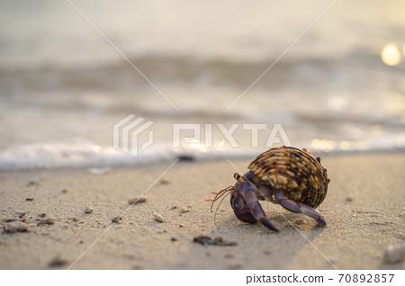 在海灘的寄居蟹 70892857
