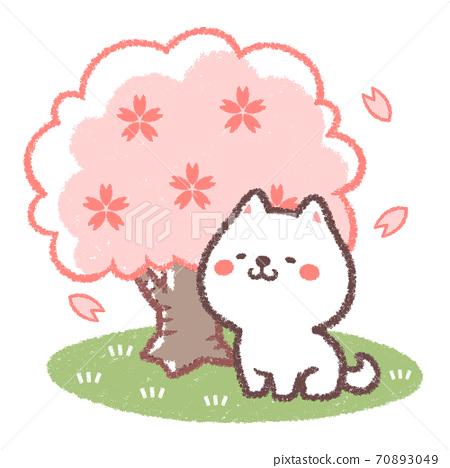 꽃놀이를하는 흰색 시바 70893049