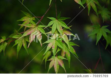 Autumn leaves of Untoan in Minami Uonuma City, Niigata Prefecture 70895769