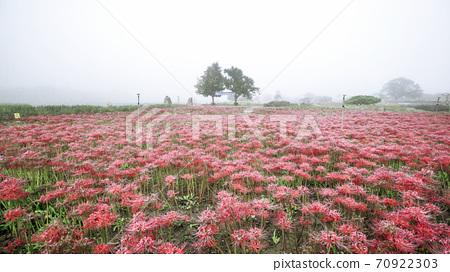 경주 첨성대 일원의 꽃 70922303