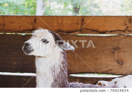 Cute and funny animals on the farm. 70924654