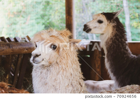 Cute and funny animals on the farm. 70924656