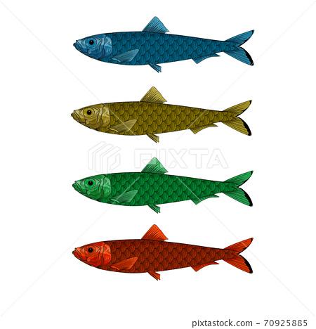 Vector illustration of woodcut sardine fishes. 70925885
